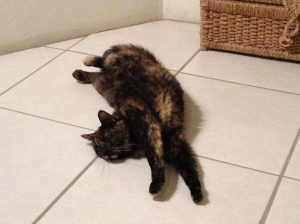 Coco, lounging in our BVI apartment, oblivious to the near-breakdown I had getting her here.