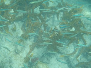 Snorkeling at Smuggler's Cove