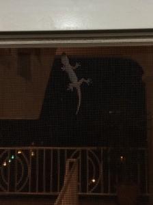 Lizard BVI