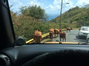 island Traffic Jam