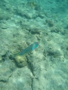Snorkeling BVI